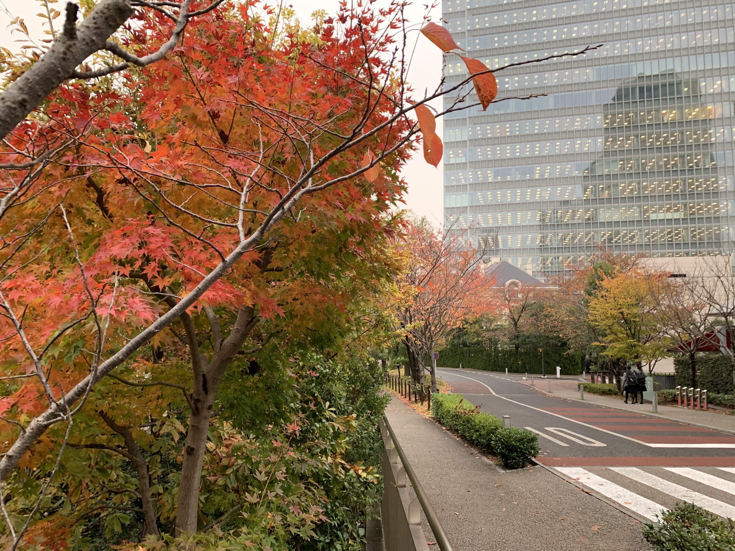 赤坂サカスの紅葉